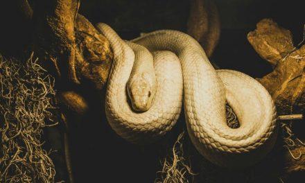 Satan a-t-il vraiment pris la forme d'un serpent pour tromper Eve ?